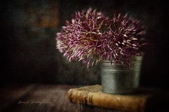 Alium {Sol 45} (Janet_Broughton) Tags: lensbaby sol45 allium purple book plant stilllife textured dark