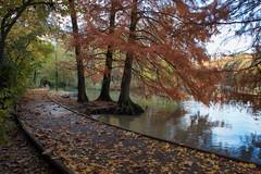Automne (Corinne Queme) Tags: automne eau arbres rivière chemin feuilles reflet marne maisonsalfort