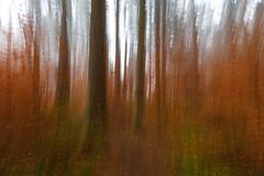 IMG_4475 (Calabrones) Tags: mignonbergeroswald deutschland oberbayern bayern münchen truderingerwald wald bäume nadelbäume nebel morgennebel kamerawackler intentionalcameramovement
