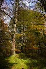Tree in Autumn (Benjamin Driver) Tags: tree trees woods wood autumn autumnal forest 2018