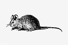 Vintage mouse illustration (Free Public Domain Illustrations by rawpixel) Tags: british animal antique art black blackandwhite cc0 creativecommons0 cute decoration design designresource domestic drawing ear engraving etching europe european fluffy fur hairy handdrawn icon illustration ink little mammal mouse name nose nostalgic oldfashioned ornament pen pest psd publicdomain rat retro rodent sketch style symbol tail tattoo vintage whisker whiskers