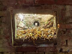 Geisterdorf 16 (Moddersonne) Tags: lost place urbex verlassen abandoned decay verfall urban exploration geisterdorf ghost village fenster window