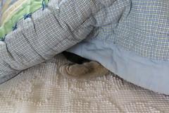 Millie 19 January 2019 2320Ri 4x6 (edgarandron - Busy!) Tags: millie graytabby cat cats kitty kitties tabby tabbies cute feline