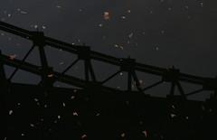 Under the Bridge (Binacat) Tags: canon eos 750d berlin tiergarten outside nature leaves landwehrkanal water reflection bridge lichtensteinbrücke color natur wasser brücke blätter autumn herbst spiegelung dawn dämmerung