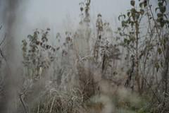 181202_Auwiesen_014 (Rainer Spath) Tags: österreich austria autriche steiermark styria graz mur nebel fog dezember december