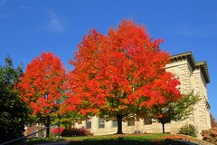 Brilliant Trees (Larry Myhre) Tags: fallfoliage colorful trees bath maine