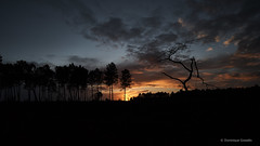 Landes magiques (domingo4640) Tags: landes petiteslandes saintgor arbre pin foret couchersoleil loxia loxia21 loxia2821 e nature sony carlzeiss