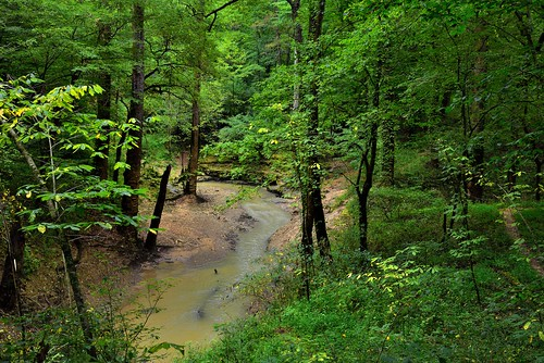 A Forested Landscape with the Echo River Spring (Mammoth Cave National Park)