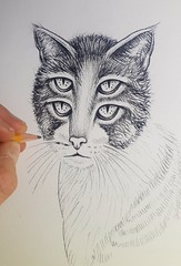 Do you remember this one? A small pencil drawing I made for my #pencilvscamera series. I found the sketch and some photos of the work in progress! 😊   #drawing #dessin #originaldrawing #cat #chat #cute #face #illusion #opticalillusion #making #art # (Ben Heine) Tags: pencilvscamera originaldrawing opticalillusion making art oeil cute eyes dessin illusion photodrawing eye face chat cat yeux drawing friend animal sketch funny