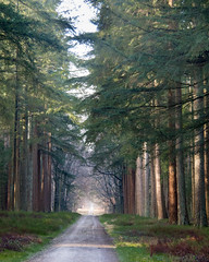 Fading (Jenne Barneveld) Tags: morningwalk walk veluwe forest woods tree trees morning road path fading magicalforest magical naturephotography nature netherlands