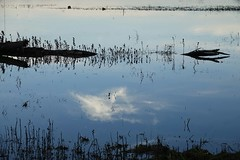 Lost slough impoundment (fernside) Tags: sacramentodelta landscape california northerncalifornia cosumnesriverpreserve reflection