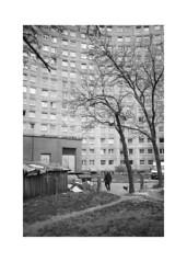 *** (Gediminas Bernotas) Tags: bessar voigtlander jupiter8 vilnius lithuania streetphotography soviet fomapan400 push iso800 kodakhc110 hdilution concrete architecture trees man dog contrast filmphotography blackwhite
