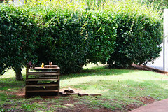 animalistic (monkeyc.net) Tags: tamborine galleryrow 2019 january scenicrim mounttamborine queensland australia summer sunday