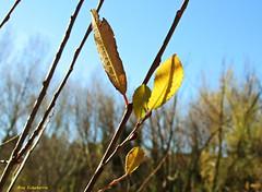 Naturaleza en enero (kirru11) Tags: naturaleza hojas ramas verde árboles cielo enero víaverde quel larioja españa kirru11 anaechebarria canonpowershot