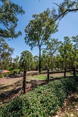 KB2_6689 (Kev Byrnes Photography) Tags: brisbane queensland australia au