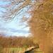 Morning sun dog walk