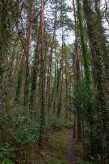 Peak Hill-1-8 (Sheptonian) Tags: somerset rural scenic landscape trees fauna grassland