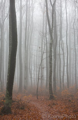 Misty mood, Norway (KronaPhoto) Tags: høst 2018 natur forest skog misty tåke fog mood shapes tree tre nature leaf autumn
