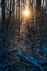 Me like the sun. Let it come. (Tor Langli) Tags: sunshine shadow karlstad sverige landscape tree nature landskap wintersun scandinavia winter sun sweden natur snow