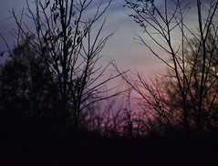 Purple Twilight Through The Trees (filmcrazy1014) Tags: nikon nature wildlife surreal magical blur blurbackground purple trees treebranch lowlight pink clolor colorfulclouds colorful evening eveningsky magicalpurple magiacal imagination shadows black background blue green brightcolors branch