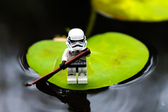 Paddleboarding (2016) #TBT (Ballou34) Tags: 2016 650d afol ballou34 canon eos eos650d flickr lego legographer legography minifigures photography rebelt4i stuckinplastic t4i toy toyphotography toys rebel stuck in plastic water pond star wars sw paddle lily pad lilypad