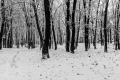 Forest mood (max tuguese) Tags: black white bianco nero blanc noir noiretblanc blanco negro schwarz weis monochrome forest wood tree trees snow snowy nikon d3400 maxtuguese landscape nature cold winter mood cloud wald calt seasonal ice