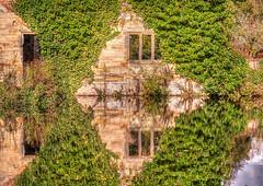 Reflections (niloc's pic's) Tags: scotneycastle reflections ruins ivy water moat lake nationaltrust lamberhurst kent door window panasonic lumix dmcgh4r