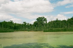 My Swamp (Kriiture) Tags: water swamp canon ae1 program fujifilm 200