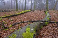 20181201_katzenkopf_0337 (doerrebachtaler) Tags: katzenkopf soonwald naturreservat buche buchenwald baumpilz nebel hunsrück seibersbach schanzerkopf hochsteinchen