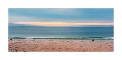 Timmendorfer Strand XII (Passie13(Ines van Megen-Thijssen)) Tags: deutschland timmendorferstrand beach strand ocean ostsee bird wave germany fujifilm x100f inesvanmegen nature inesvanmegenthijssen