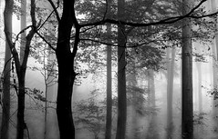 Nebulous (pwendeler) Tags: fog foggy forest foggyforest nebel nebelig tree trees nature natur naturfotografie naturephotography hessen hohestrase viaregia sonyalphaa6500 sony landschaft landscape landscapephotography landschaftsfotografie