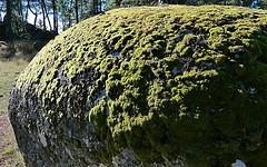 Musgo sobre granito (MAMM Miguel Angel) Tags: musgo granito