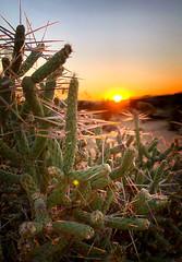 181025 Cactus Sunrise (Fob) Tags: october 2018 travel trip ca joshuatree noahpurifoyoutdoordesertartmuseum