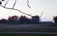 zenit 19-helios 44m2054 (Fabio.Buoso) Tags: mare nebbia alba caorle venezia italia zenit 19 film camera analogic