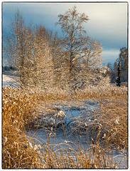 Nordbytjernet 9. desember 2018 #5 (Krogen) Tags: norge norway norwegen akershus romerike ullensaker nordbytjernet landscape landskap vinter winter krogen panasoniclumixgx7