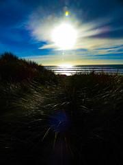 The Top of the Dunes (Steve Taylor (Photography)) Tags: black blue yellow newzealand nz southisland canterbury christchurch newbrighton dunes ocean pacific sea seaside waves grass lensflare glare glow sky cloud sun sunny sunshine