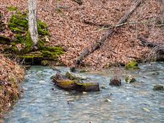 IMGPJ47994_Fk - Horseman Hide-A-Way Campground Spring (David L. Black) Tags: corydon indiana unitedstates us cave olympusomdem1mkii olympus1240f28