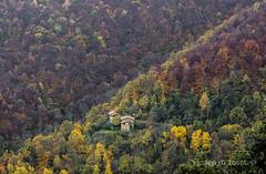 colors de tardor (Josep M.Toset) Tags: arbres bosc camí catalunya colors d850 caducifòlies groc josepmtoset daurat nikon paisatges verd vermelloses fulles branques vall tardor ripollès muntanya sigma24105mmf4dgoshsmart