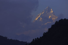 Machapuchare (Fish Tail) mountains as seen at sunrise (tanongsak.s) Tags: scene colorful summer clouds natural light annapurna nepal mountain blue machapuchare sky sunrise range beautiful view nature mount himalaya fishtail travel landscape mountains outdoor pokhara tourism asia hill journey peak trekking summit mountaineering beauty background wallpaper high snow rural scenic scenery top valley highlands himalayan machhapuchhre base camp himal sunset