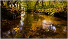 Dutch jungle (Rob Schop) Tags: samyang12mmf20 nd64 wideangle le pola hoyaprofilters jackboots f11 leuvenumsebos autumn sonya6000 forest veluwe