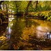Dutch jungle (Rob Schop) Tags: samyang12mmf20 nd64 wideangle le pola hoyaprofilters jackboots f11 leuvenumsebos autumn sonya6000 forest veluwe