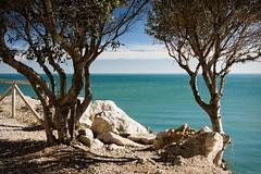 a window to the sea (*BegoñaCL) Tags: sea tree horizon rock bench mediteráneo blue sky cloud peñíscola begoñacl