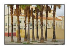 (Zwaireem) Tags: malaga me pentaxart pentax palm apartments square multipleexposure icm intentionalcameramovement holiday
