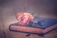 The rose and the book (Ro Cafe) Tags: nikkor105mmf28 sonya7iii stilllife rose pink flower book romantic textured