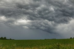Strength (timvandenhoek1) Tags: soybeanfield sonyilce6000 sigma30mmf14dcdncontemporaryemount stormclouds missouri midwest snapseed callawaycounty timvandenhoek