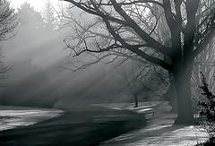"Cincinnati - Spring Grove Cemetery & Arboretum ""A Morning-Lit Road"" (David Paul Ohmer) Tags: cincinnati ohio spring grove cemetery arboretum road light rays"