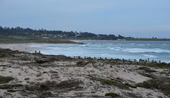 The beach from Asilomar (afagen) Tags: california pacificgrove asilomarstatebeach montereypeninsula asilomar beach pacificocean ocean