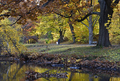 A Golden Morning in Autumn (mamieli2016) Tags: autumncolors autumnmorning reflection park tree water grass wood river boston autumn fall bridge stream morning riverway