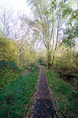 Footpath On The Butts (Martin Pettitt) Tags: 2018 autumn burystedmunds dslr footpathonthebutts leaves nikond90 november outdoor sigma1020mmf456exdchsm suffolk trees uk