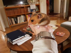 Bättre en hamster i handen än tio i skogen (nilsw) Tags: fotosondag fs181202 ordsprak
